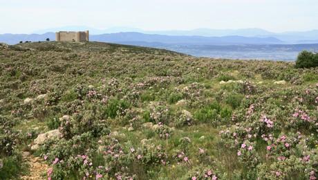 Que faire à l'Estartit - castell Montgri