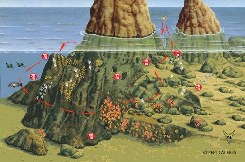 site de plongée iles medes : Carall Bernat