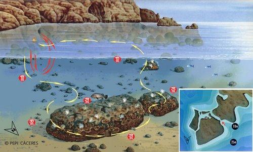 sites de plongée aux iles Medes : Dofi nord