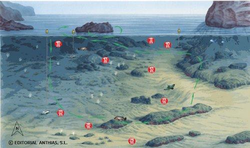 sites de plongée des iles MEDES - les ferrranelles