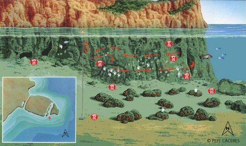 sites de plongée aux îles MEDES - La Vaca