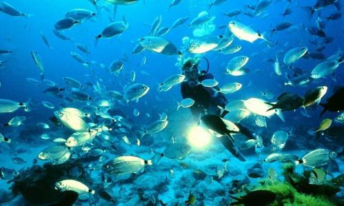 Plongée îles MEDES