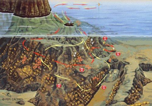 Sites de plongée iles MEDES - Pedra de Deu