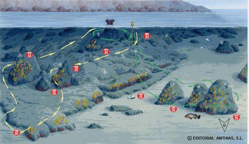 Sites de pongées îles MEDES - Salpatxot