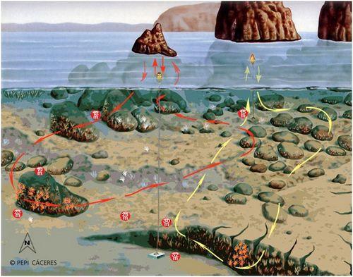 Site de plongée iles medes - Tascó Petit