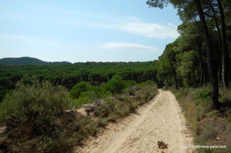 pinède de Pals randonnée costa brava pineda pals begur (1)