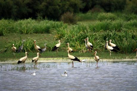Parc des aiguamolls d'emporda - parcs naturels sur la Costa Brava