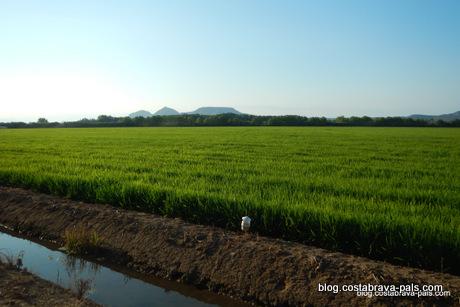 joyaux secrets sur la Costa Brava, rizières pals