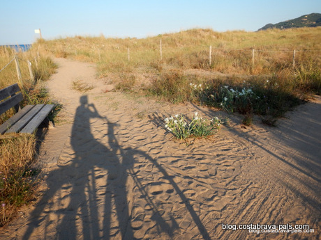 balade à vélo pals (5)