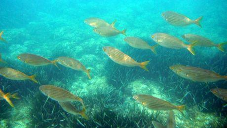 snorkeling costa brava (1)
