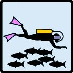 type plongée - faune pleine eau