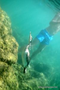 cormoran en train de pecher (3)