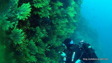 plongée Punta d'es Plom à Begur