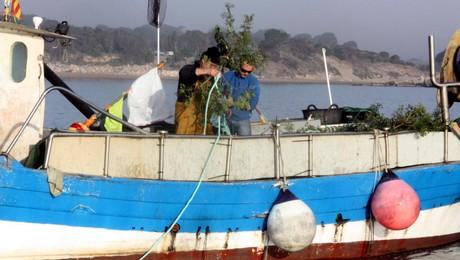 projet sepia l'escala mise à l'eau de branches