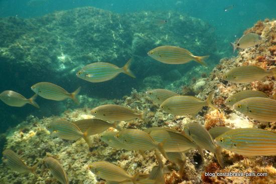 snorkeling costa brava (10)