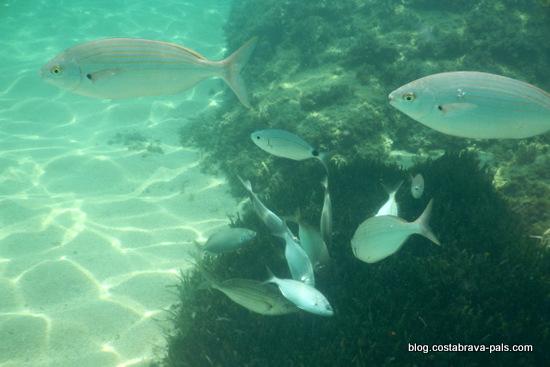 snorkeling costa brava (11)