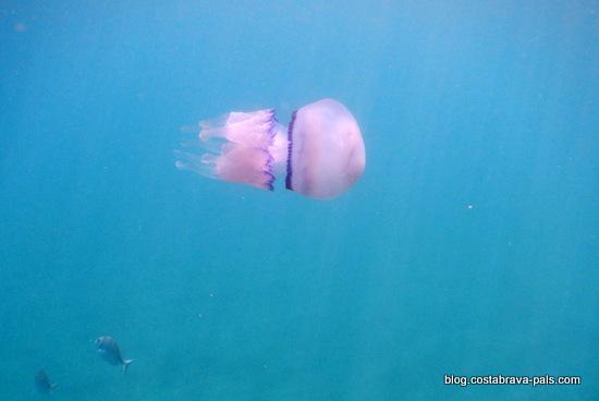snorkeling costa brava (16)