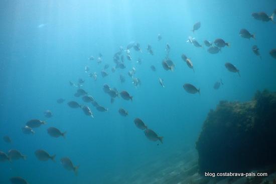 snorkeling Visiter les iles MEDES