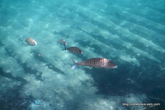 snorkeling costa brava (19)