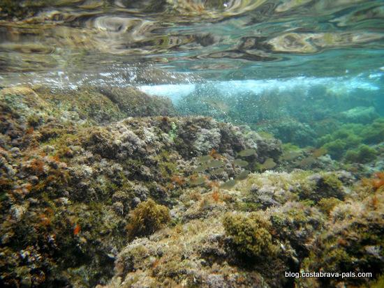snorkeling costa brava (2)