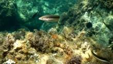 snorkeling costa brava (3)