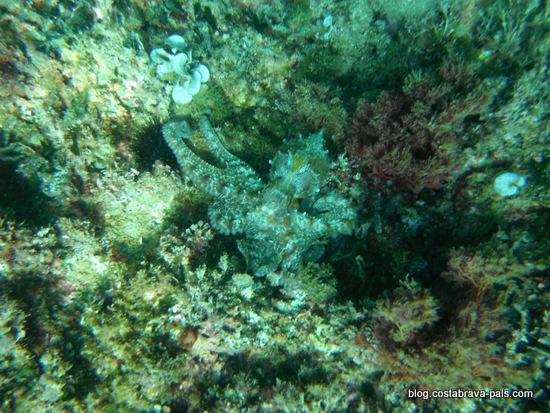 snorkeling costa brava (5)