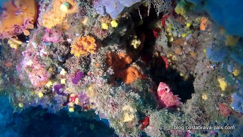joyaux secrets sur la Costa Brava - plongée Begur