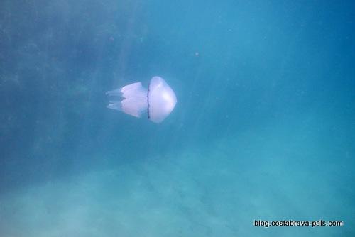 méduses sur la Costa Brava