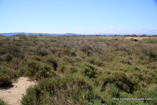 Les marais de l'Estartit les espaces dunaires