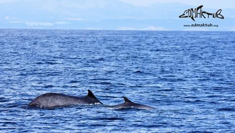 edmaktub baleines costa brava