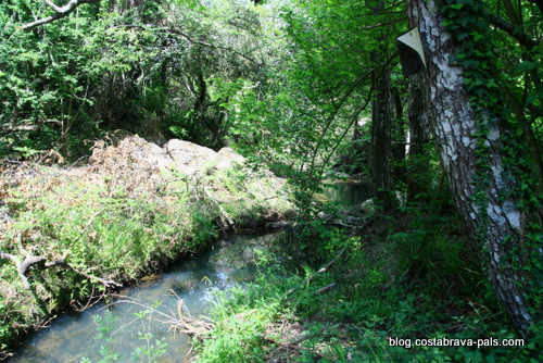 Les Gavarres - ruisseau