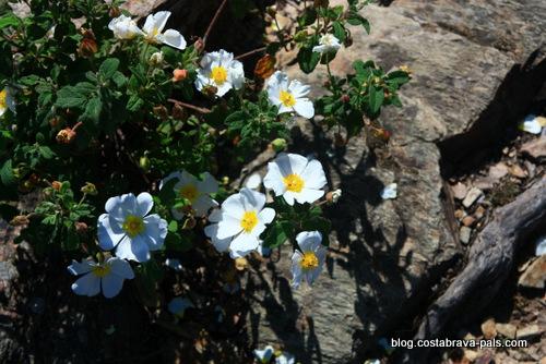 Les Gavarres -fleurs