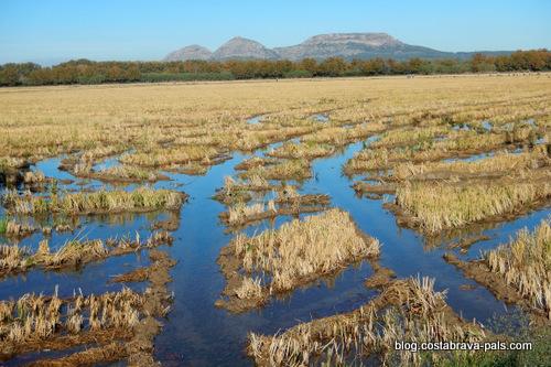 Balade dans les rizières de Pals - Mongri