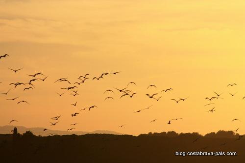 oiseaux Balade dans les rizières de Pals