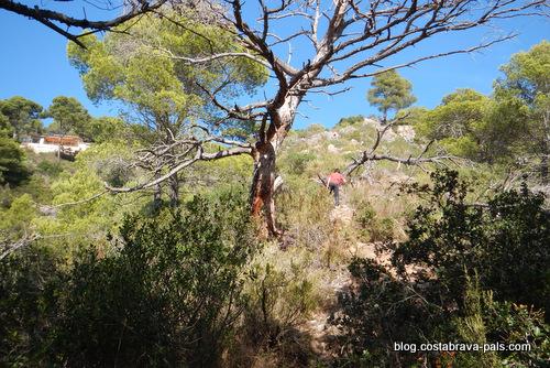 Randonnée autour de Begur Aiguablava
