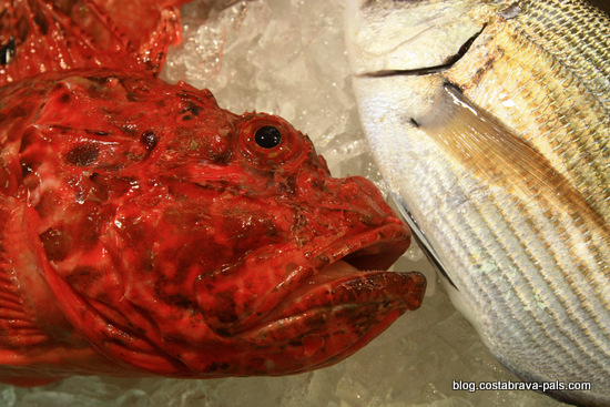 Marché à Palamos Costa Brava - la criée au poisson