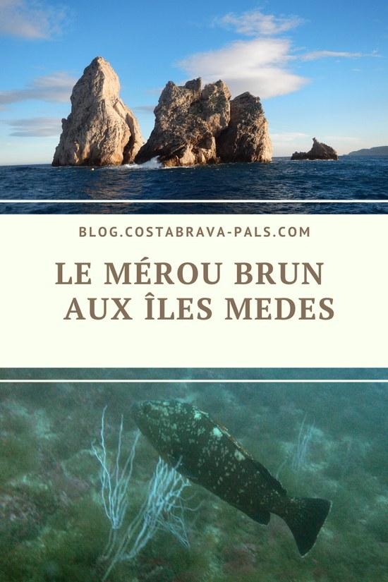 le mérou brun aux iles Medes