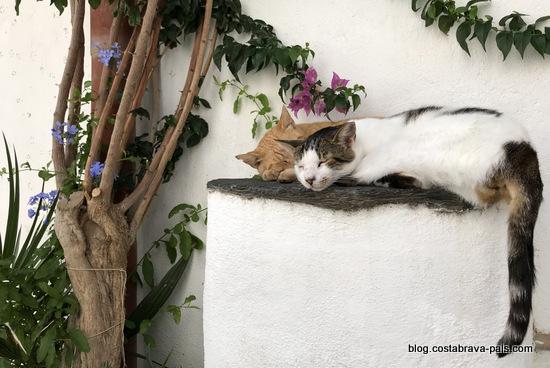 chats à cadaques