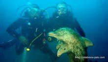 dauphin dofi iles medes